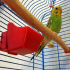 Feeding Trough For Parrot image