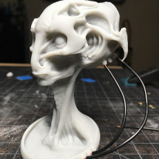 Picture of print of Alein bust