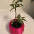 Pot for bonsai or plant image