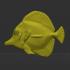 Yellow tang marine fish image