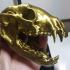 Raccoon Skull image