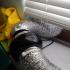 Phrozen Transform Fanport exhaust image
