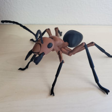Picture of print of Ant