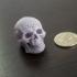 Meshed Skull image