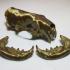 American Mink Skull image
