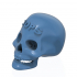 Logotip on Human Skull image