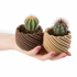 Cactus Planter - Whirly image