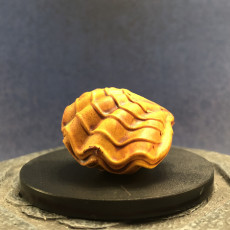 Picture of print of Giant Clam - Open and Closed