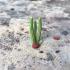 Cactus 2 for Desert landscape 28mm tabletop gaming image