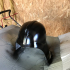 Wearable Darth Vader Helmet (for Prusa i3 sized printers) image
