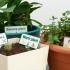 Multicolor plant labels image