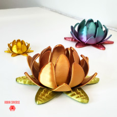 Picture of print of Lotus Flower