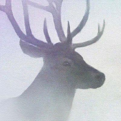 Deersigner